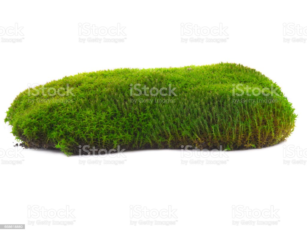 moss on a white stock photo