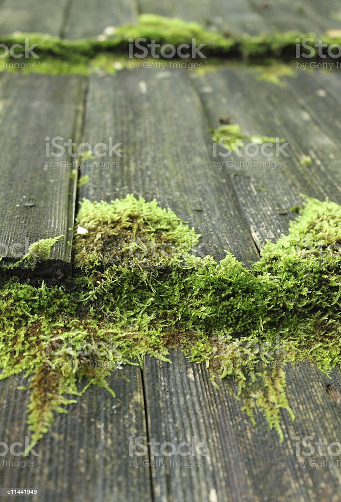Moss on a wooden hut roof royalty-free stock photo