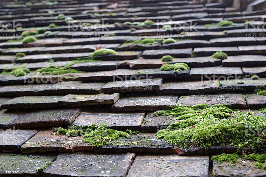 Moss on Clay Tiled Roof royalty-free stock photo
