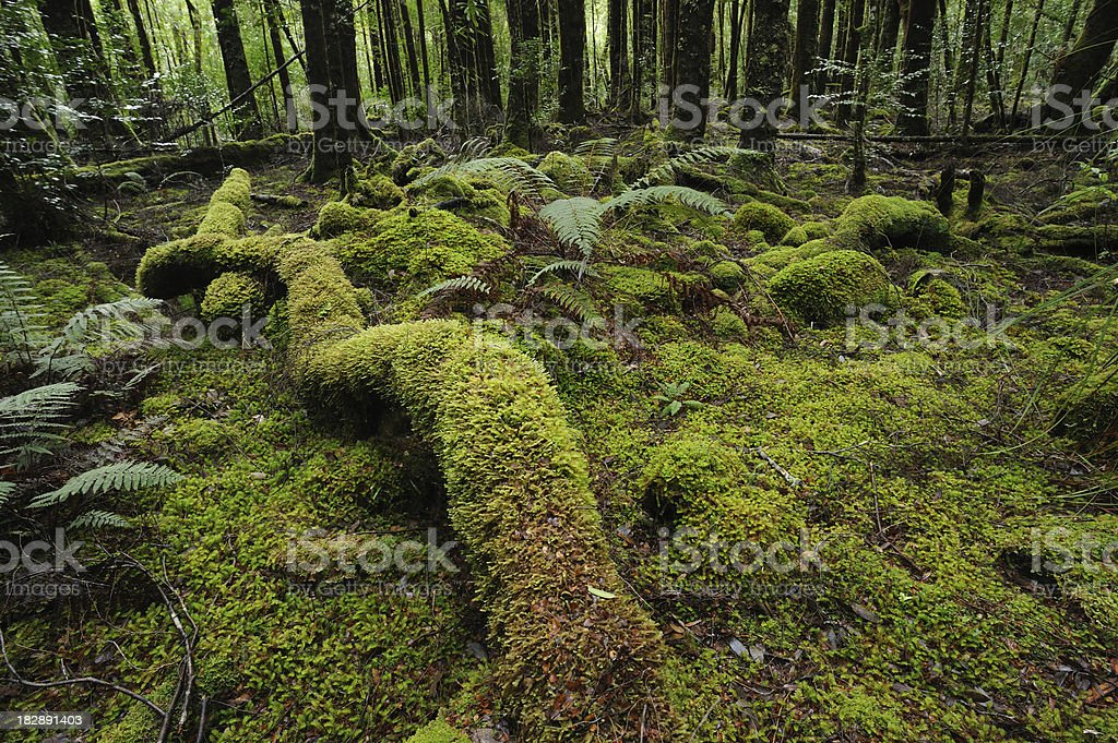 Moss on forest ground stock photo