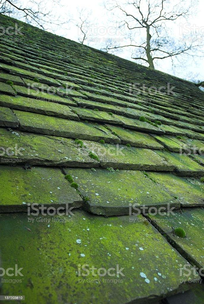 Moss on old roof tiles. stock photo