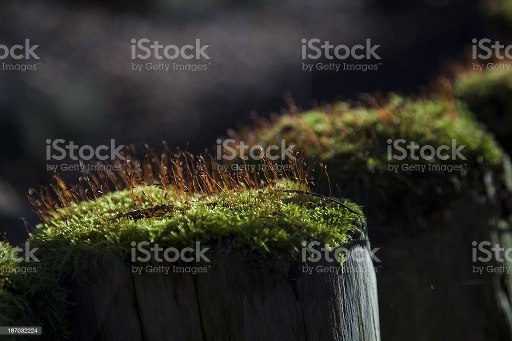 moss on posts royalty-free stock photo