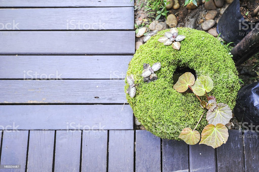 moss on pot royalty-free stock photo
