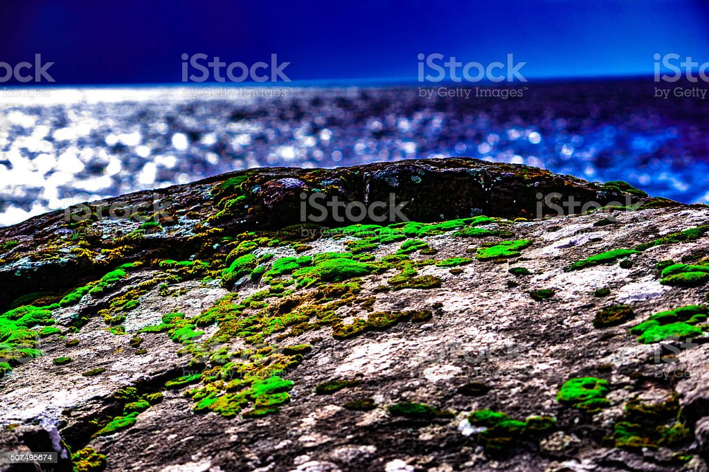 Moss on Rock royalty-free stock photo
