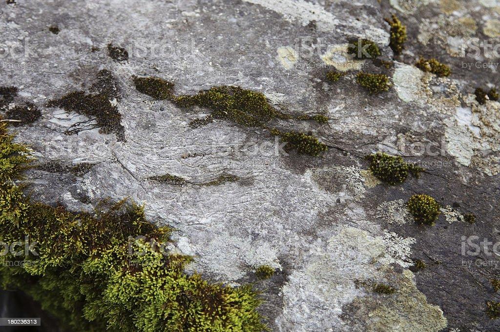 Moss on rocks royalty-free stock photo