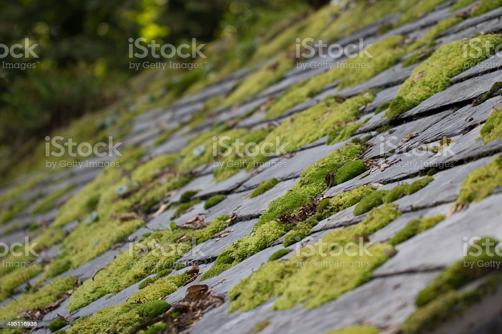 Moss on Roof Tiles stock photo