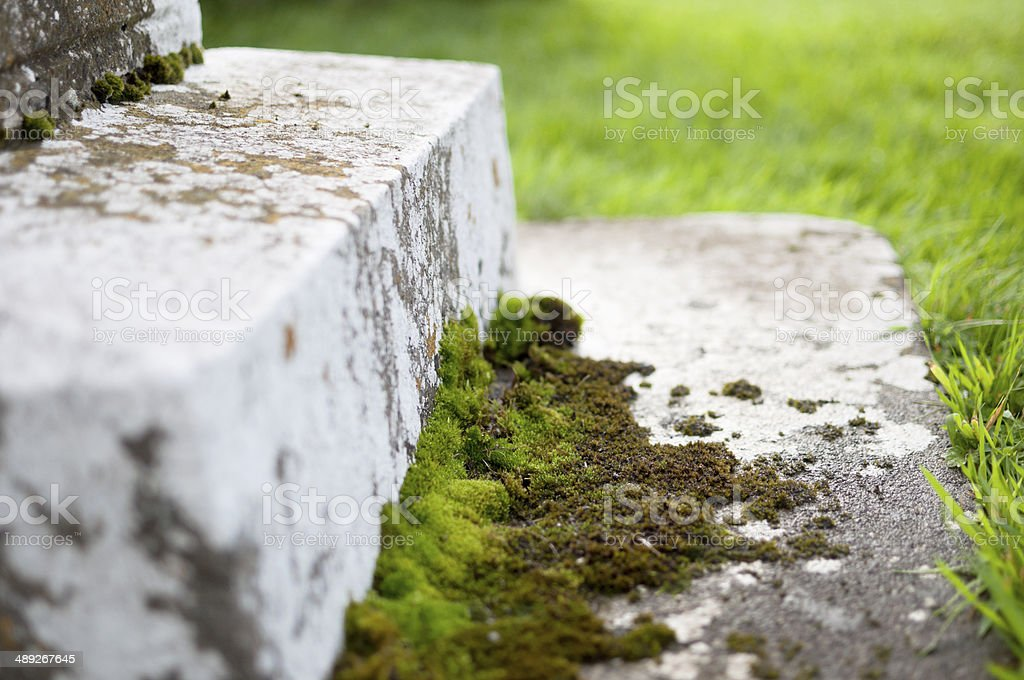 Moss on steps stock photo
