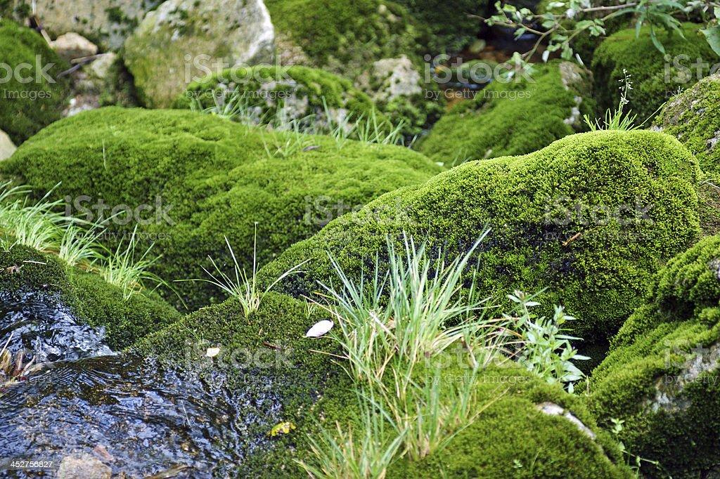 Moss on stone royalty-free stock photo