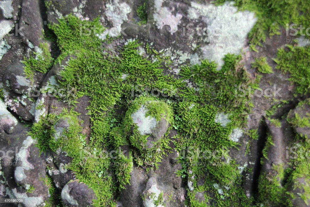 Moss on temple ruins Angkor Wat Cambodia stock photo