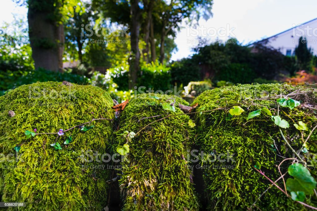 Moss On The Garden Wall stock photo