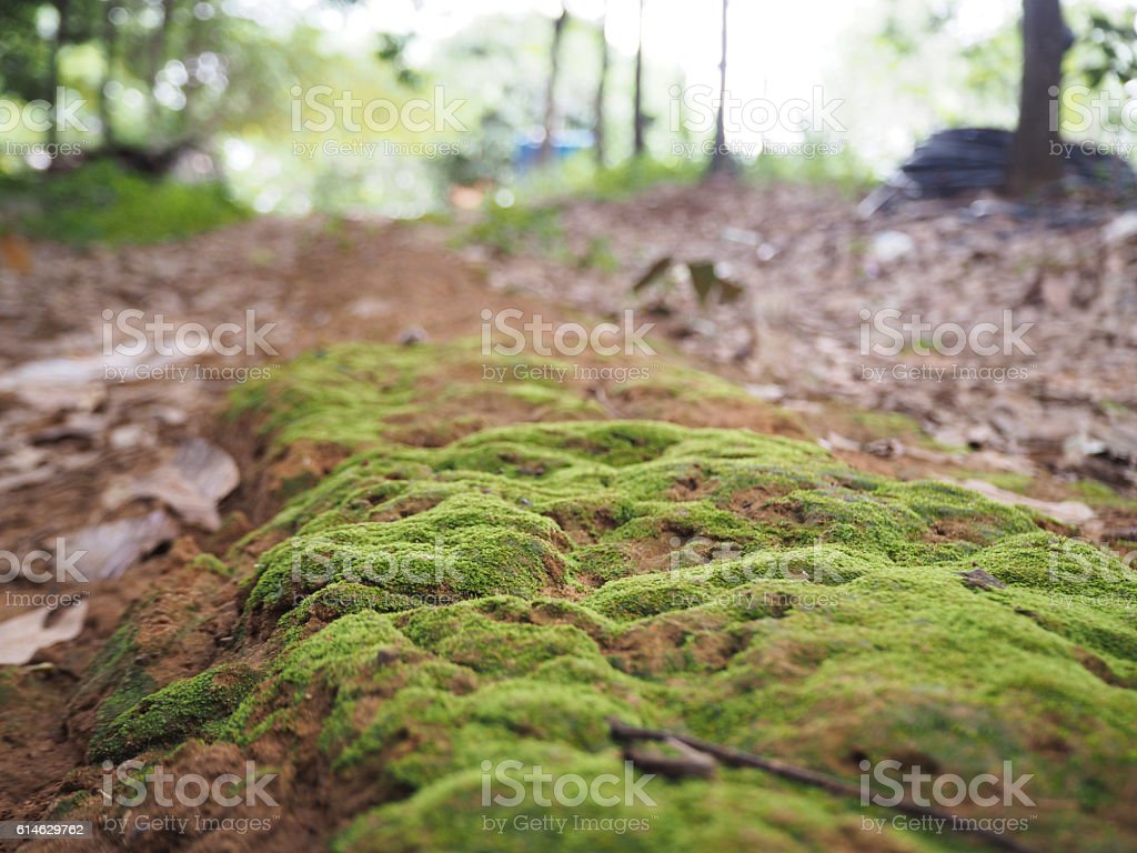 moss on the ground stock photo