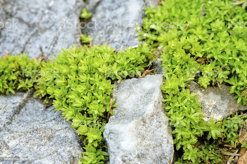 moss on the stone royalty-free stock photo