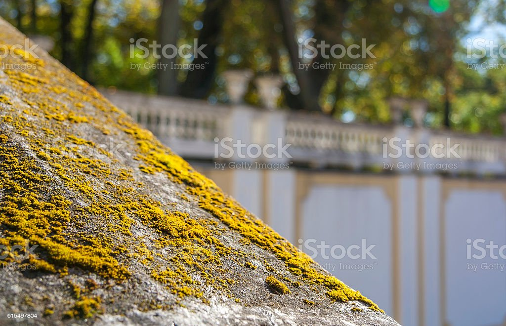 Moss On The Stone stock photo