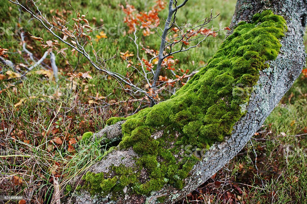 Moss on the tree bark at the root. stock photo