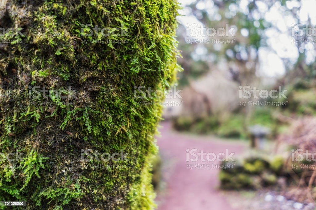 moss on the tree stock photo
