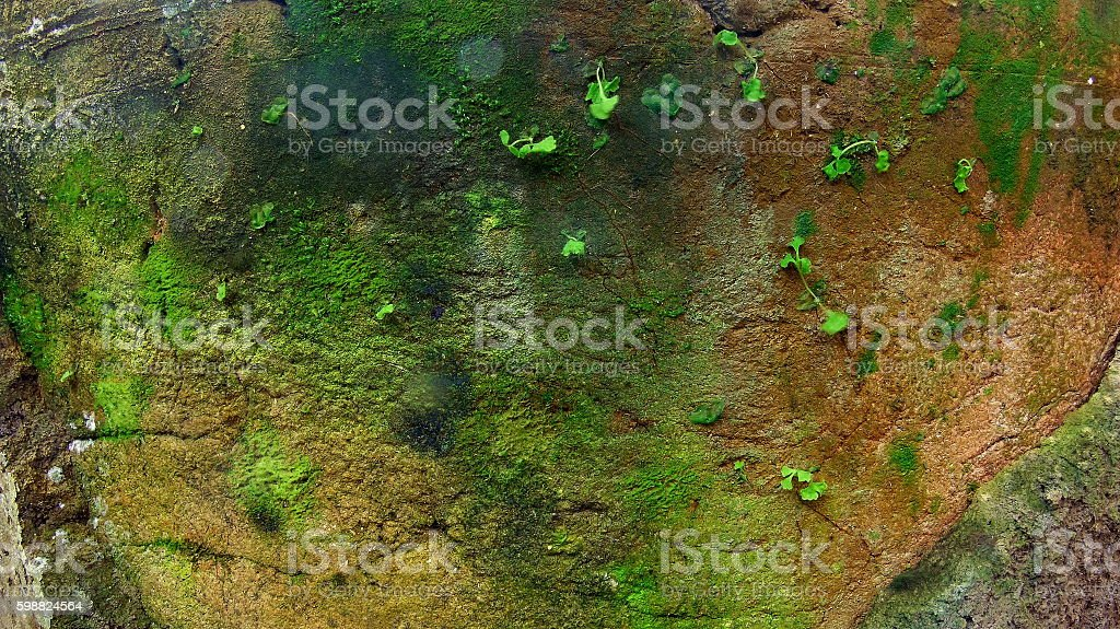 Moss  on the wall background stock photo