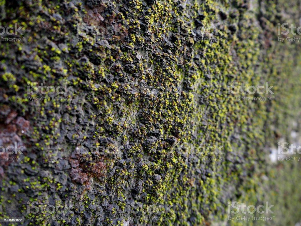 Moss on the wall , beautiful background stock photo