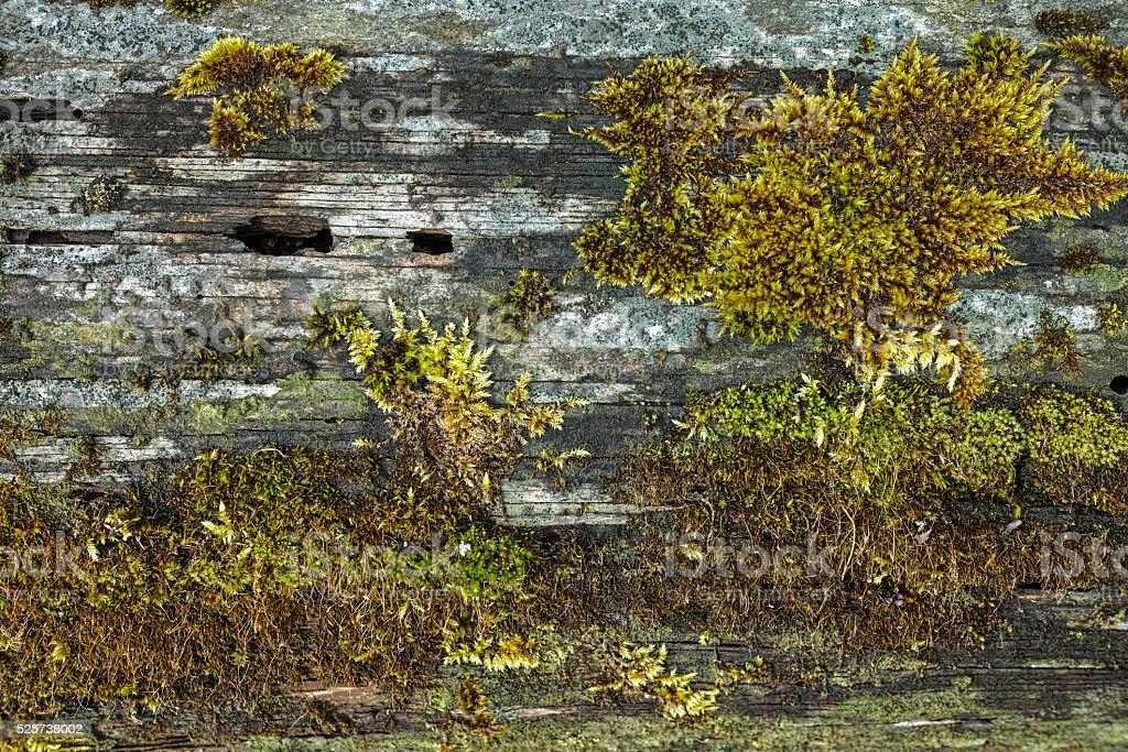 Moss on Tree Bark royalty-free stock photo