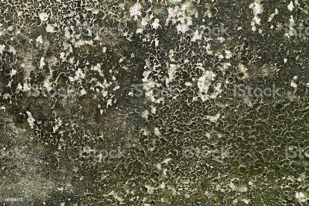 moss on wall stock photo