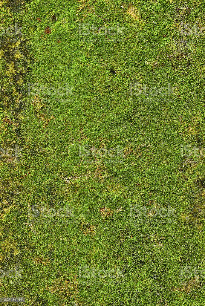 Moss on wall texture background. stock photo