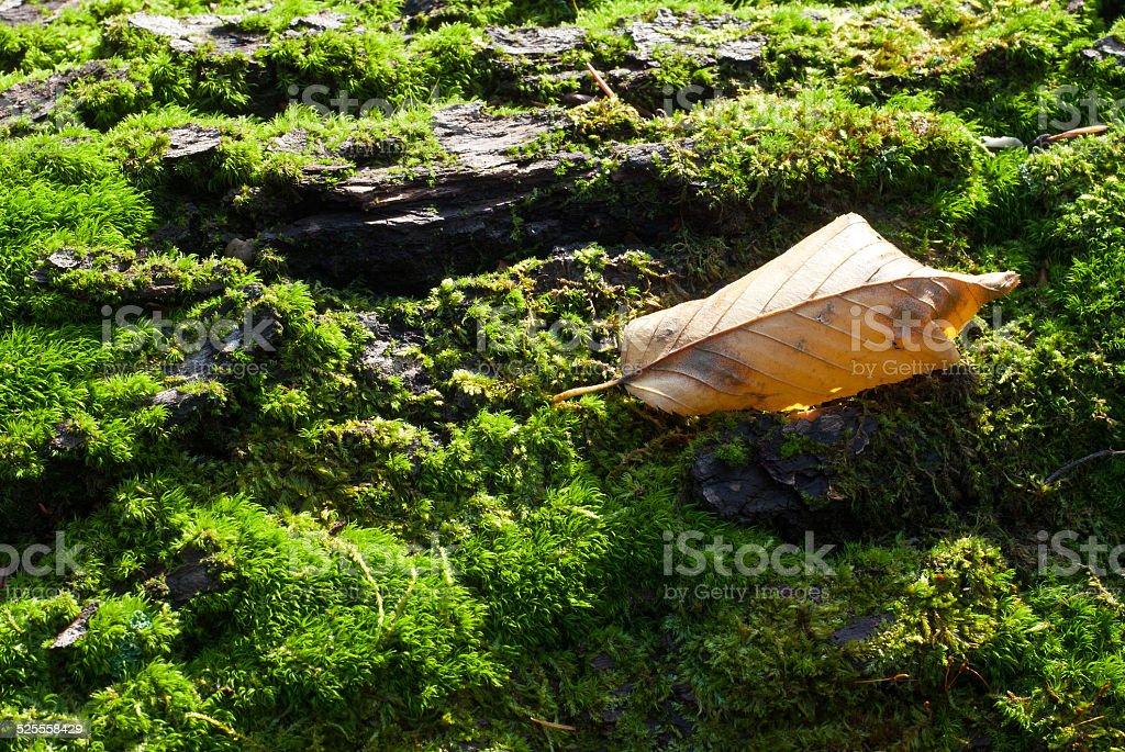 Moss foto de stock libre de derechos