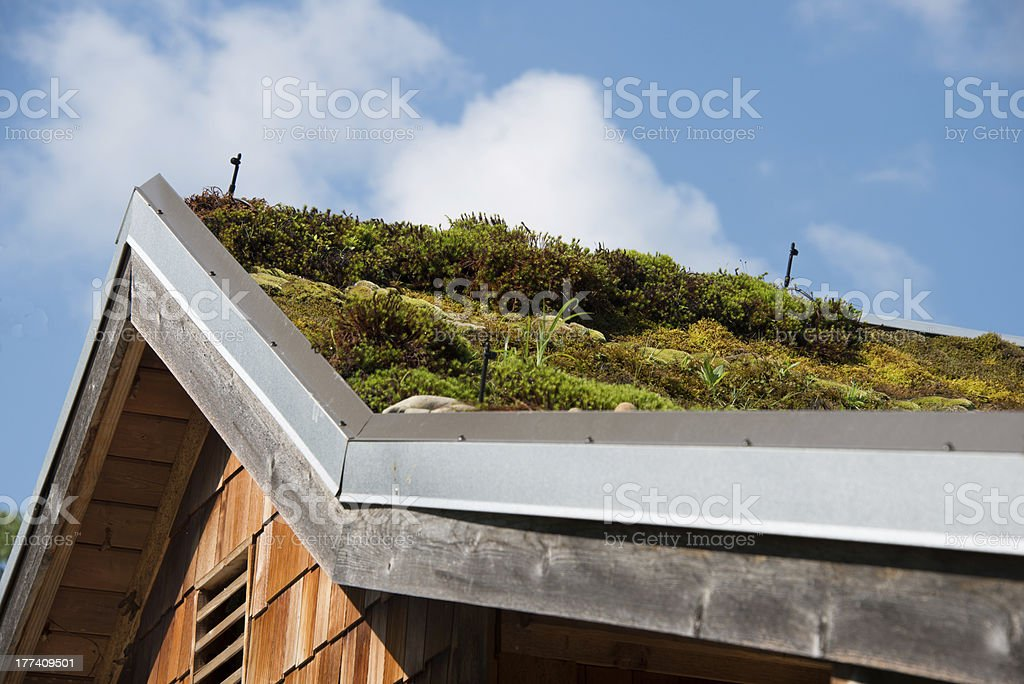 Moss Plants on Roof stock photo