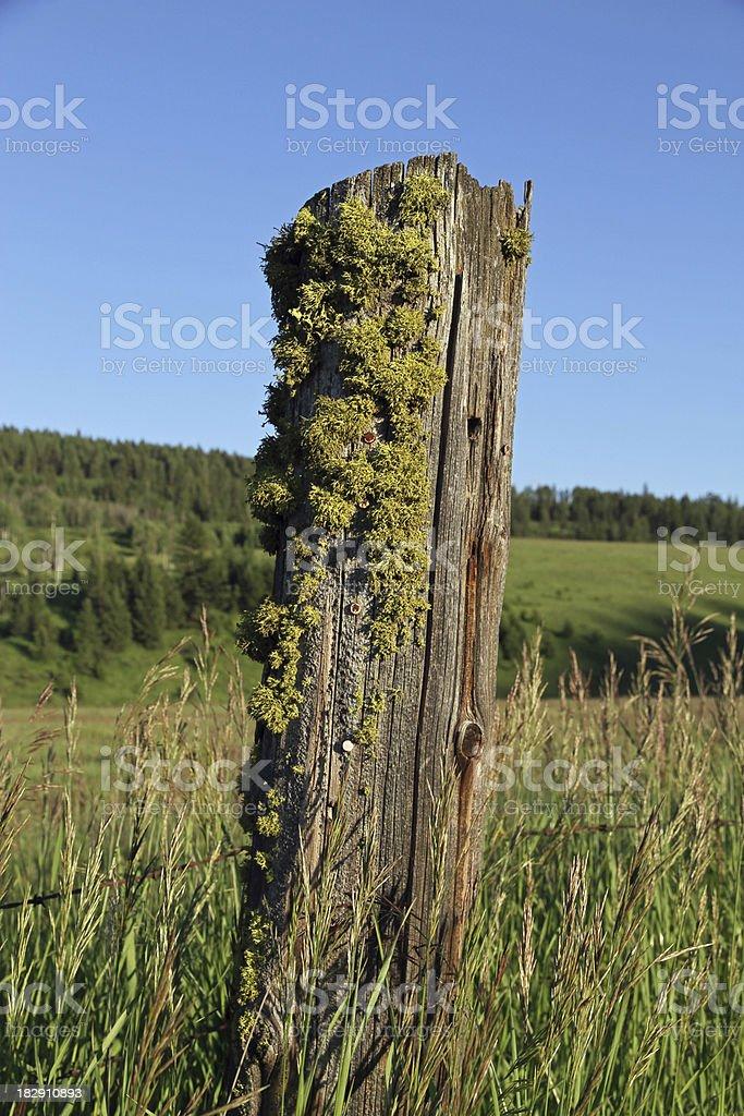 Moss Post royalty-free stock photo