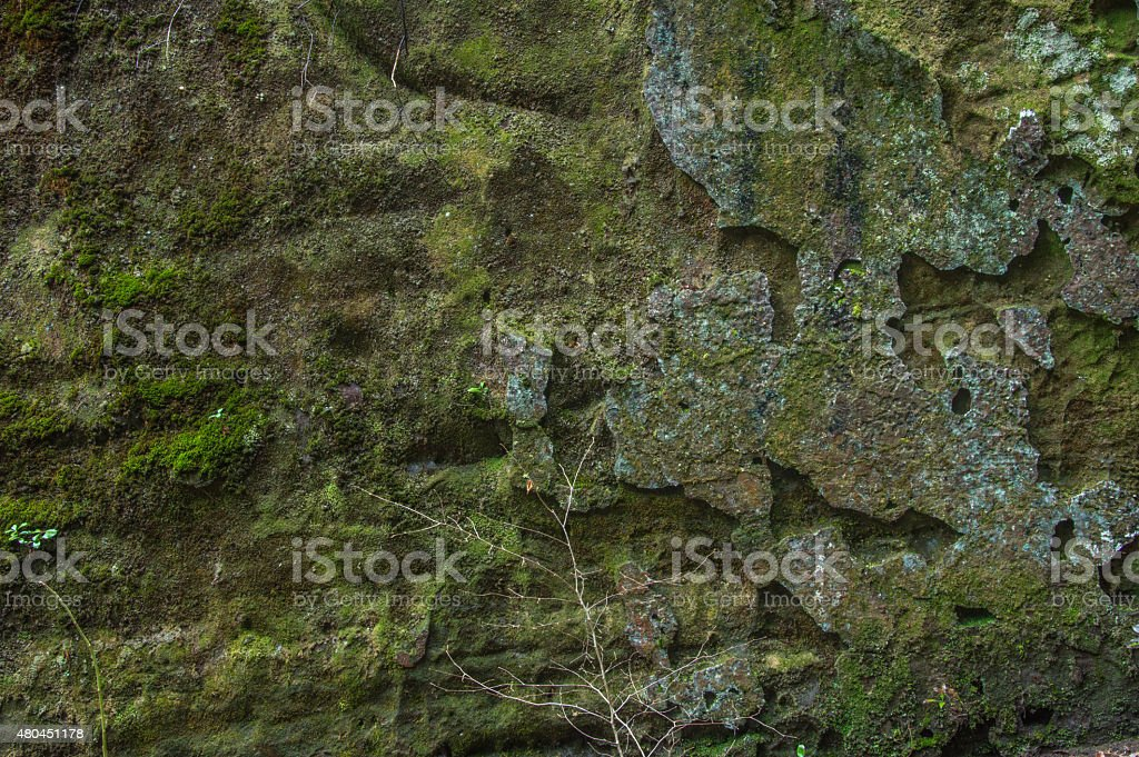 Moss Rock and Lichen Texture stock photo