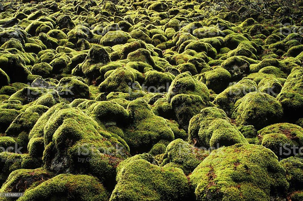 Moss rocks royalty-free stock photo
