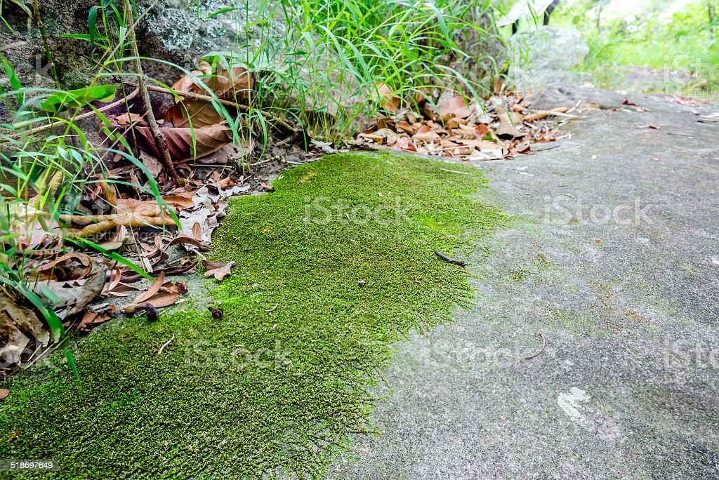 Moss, small flowerless plant stock photo