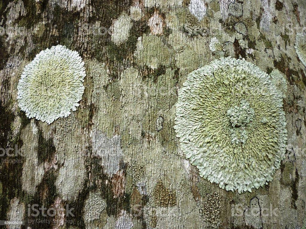 Moss texture on old tree bark stock photo