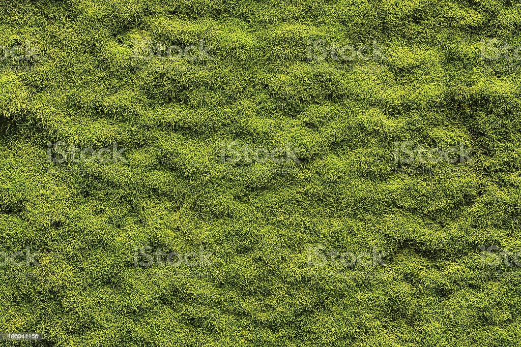 Moss texture royalty-free stock photo