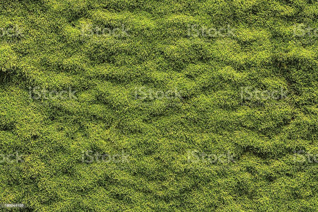 Moss texture stock photo