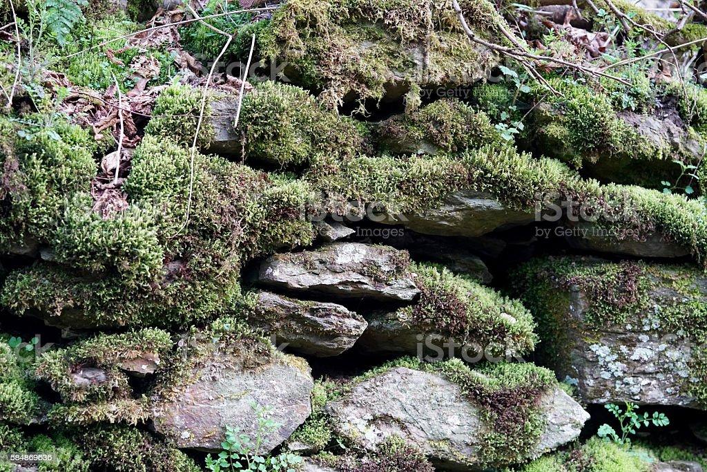 moss-covered stones stock photo