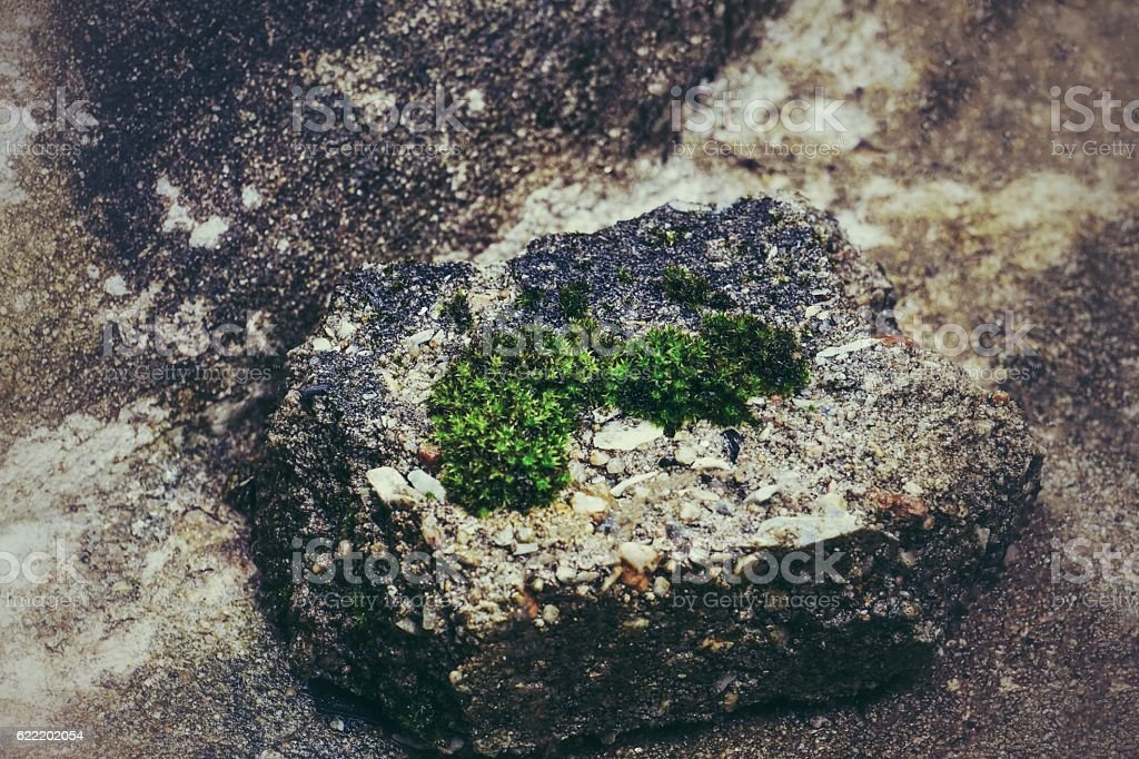 Mosses on the rock royalty-free stock photo