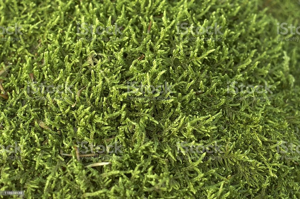 Mossy background royalty-free stock photo
