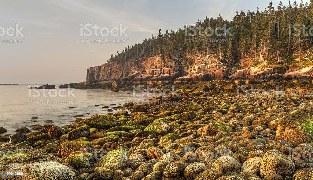 Mossy Boulders on Acadia Coast stock photo