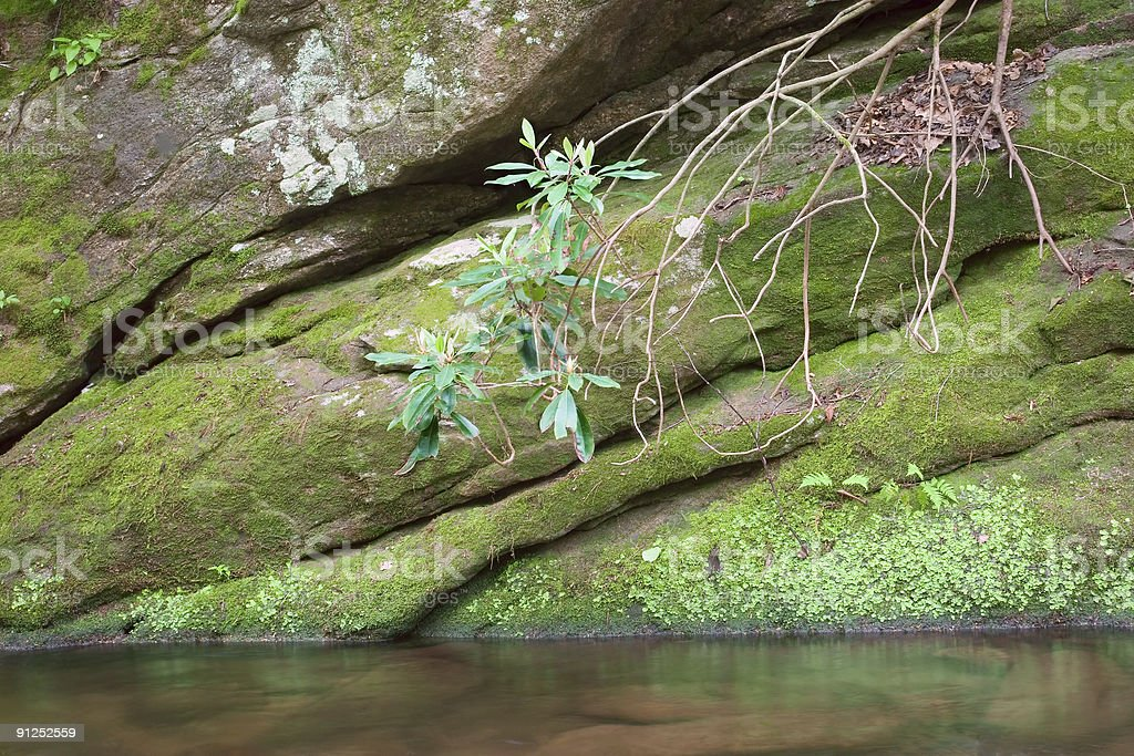 Mossy Canyon royalty-free stock photo