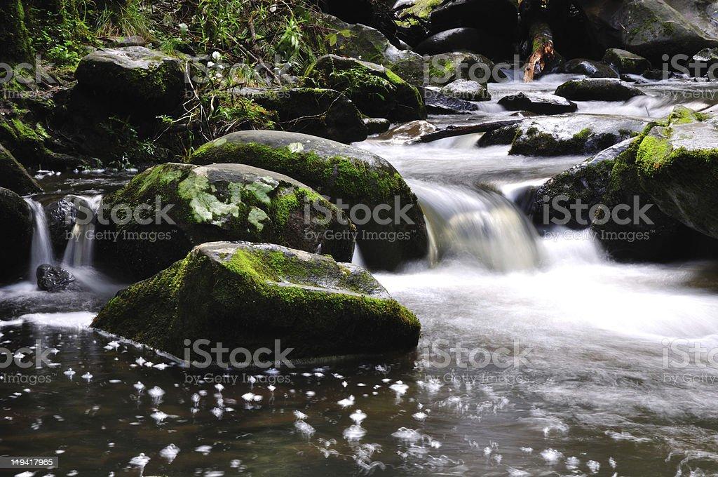 Mossy Creek royalty-free stock photo
