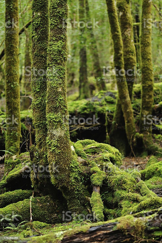 Mossy Forest, royalty-free stock photo