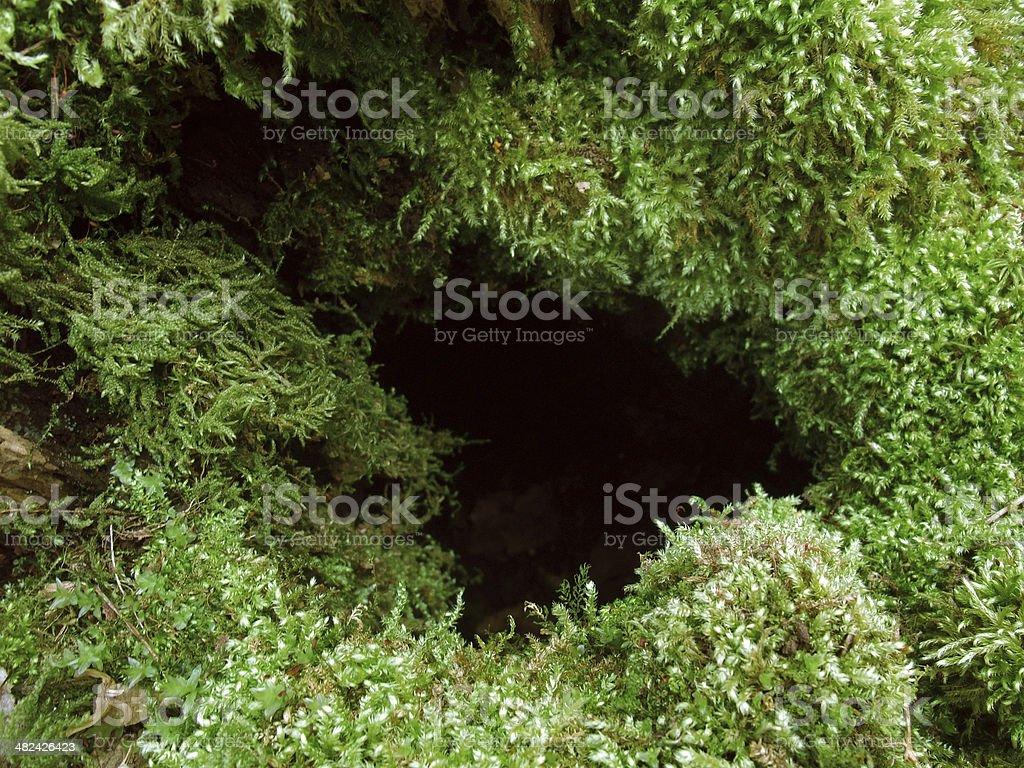 mossy hole royalty-free stock photo