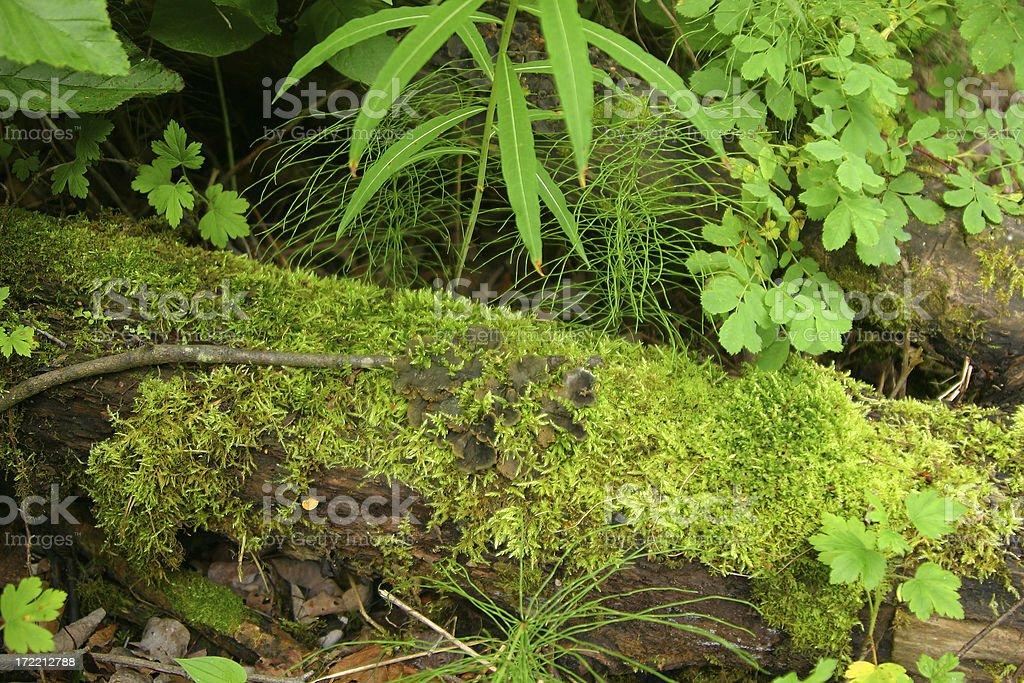 Mossy Log royalty-free stock photo