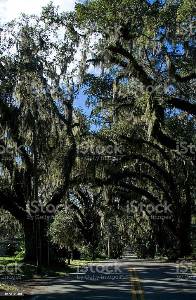 Mossy Oaks, Inverness Florida stock photo