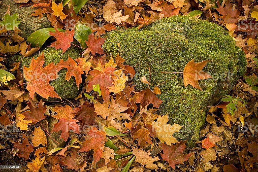 Mossy roche photo libre de droits