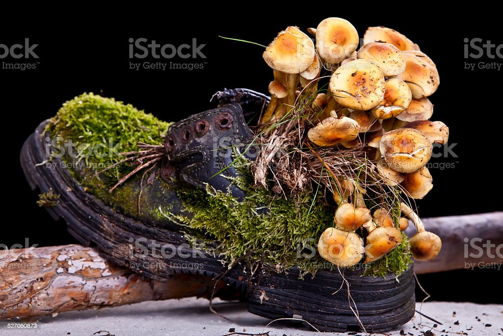 Mossy Shoe with Fungus stock photo