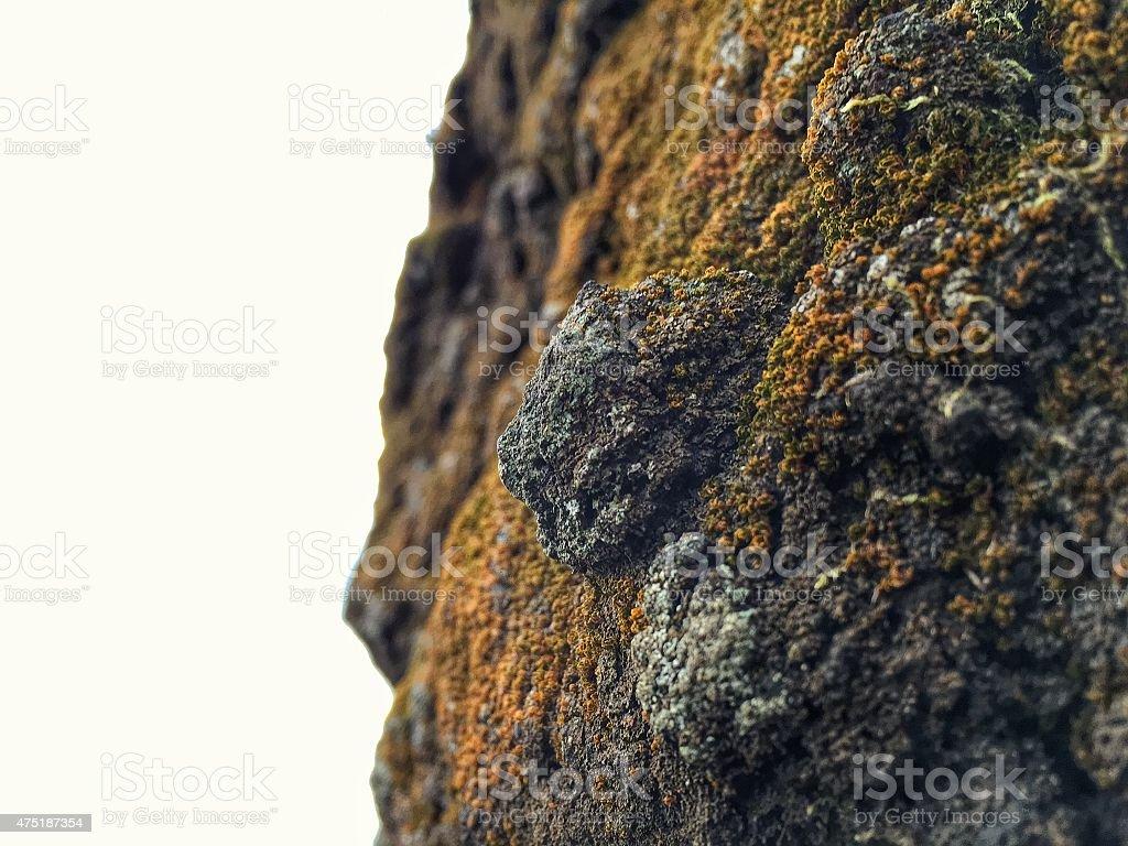 Mossy Stone stock photo