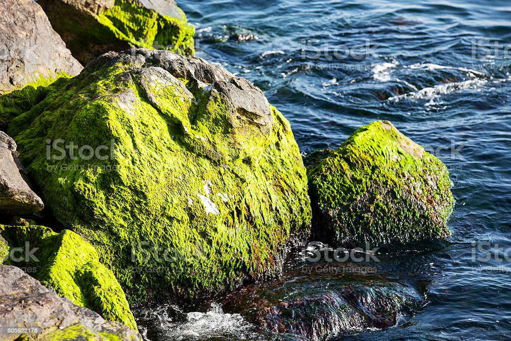 Mossy stone stock photo