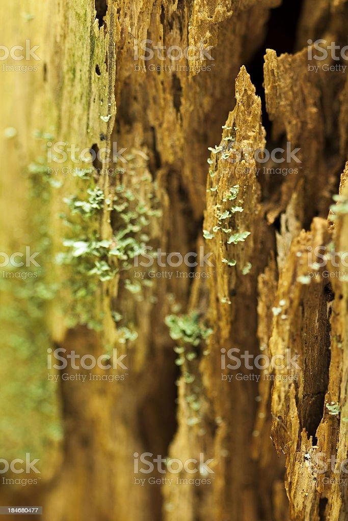 Mossy Stump royalty-free stock photo