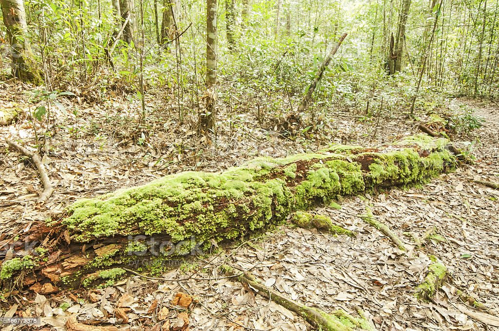 mossy tree trunk in the forest royalty-free stock photo