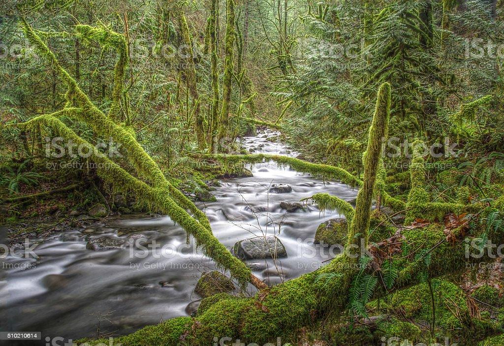 Моховое деревьев и течет поток Стоковые фото Стоковая фотография
